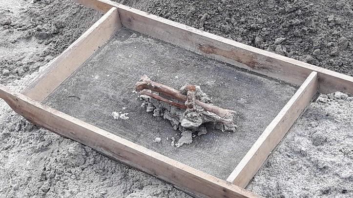மன்னார் புதைகுழியில் கால்கள் இரும்புக் கம்பியால் கட்டப்பட்ட நிலையில்  புதைக்கப்பட்டிருந்த மனித எச்சம் மீட்பு