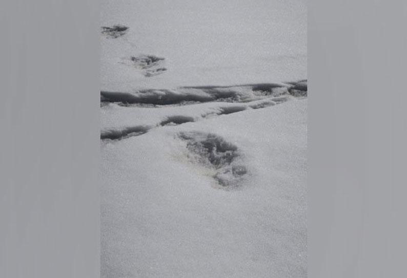 இமய மலையின் அடிவாரத்தில் பனி மனிதனின் கால் தடம்? -ராணுவ வீரர்கள் தகவல்