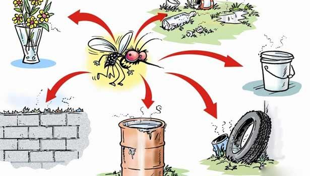 201709200814327140_How-to-prevent-dengue-fever_SECVPF
